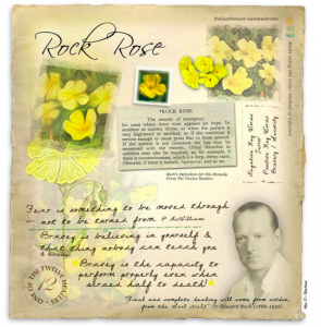 Rock Rose, courage et présence d'esprit
